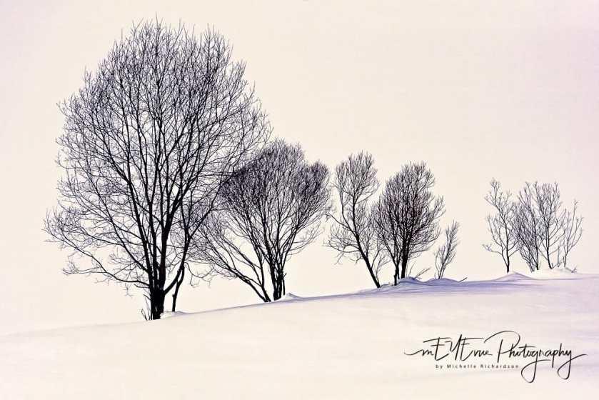 Trees--2 2